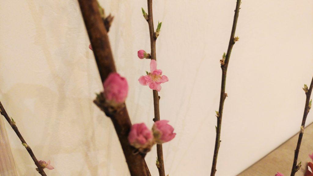 春色のきざし